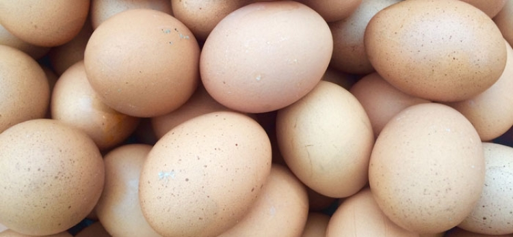 Food Standards Scotland responds to Fipronil in eggs investigation
