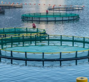 fish-farming-sustainability