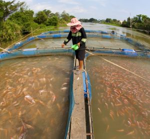 FAO and CAFS to strengthen the sustainability of aquaculture and fisheries