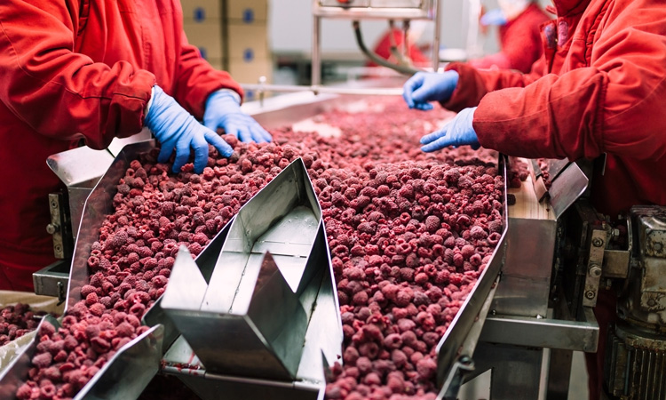Research evaluates environmental monitoring by frozen food industry