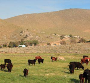 grazing-grasslands-food-production-milk-meat
