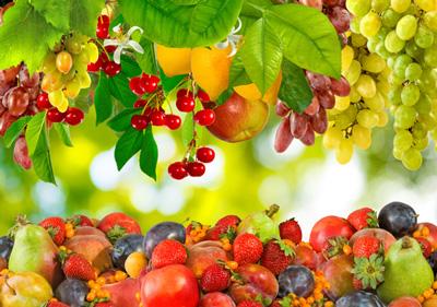 growing-fruits