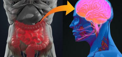 Prebiotics can improve sleep by influencing gut bacteria, study finds