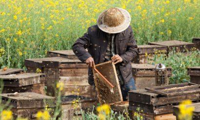 honey-bee-day-1