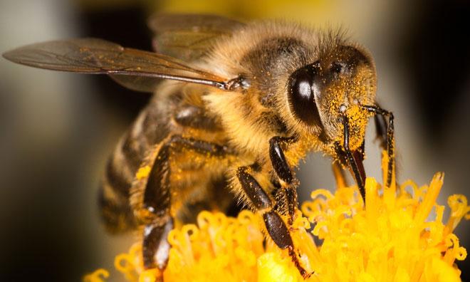 honey-bee-day