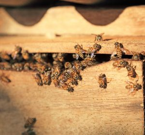 honey-food-safety-randox