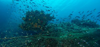 Farmed fish diets wiping out wild fish stocks in Asia and Africa