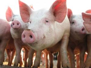jbs-usa-pork