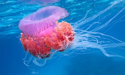 jellyfish-food-fraud-uni-southampton