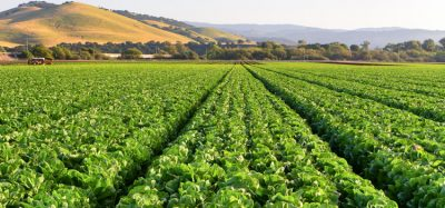 FDA and CDC declare multi-state romaine lettuce E.coli outbreak as over