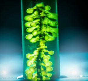 Danish project funded to research microalgae as sustainable protein source