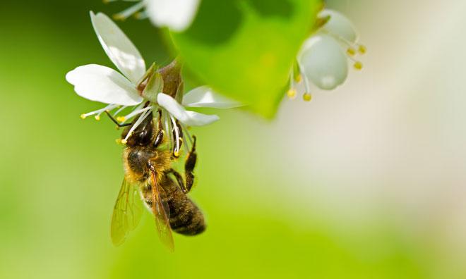 national-honey-bee-day