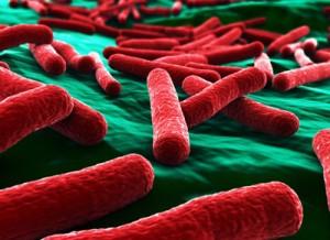 niagara-water-e-coli