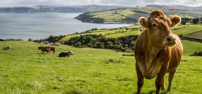 Northern Ireland to receive £279 million agriculture funding