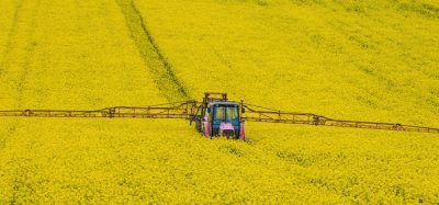 NFU calls for government policy to manage oilseed rape production risks