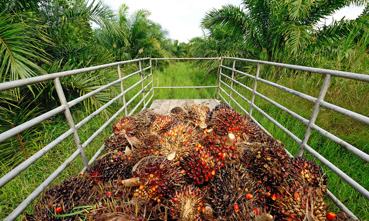RSPO delivers new standard for smallholders in sustainable palm oil