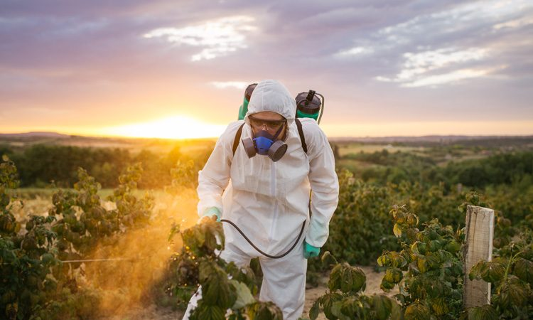 California bans sale of chlorpyrifos