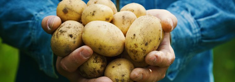 North America's potato shrinkflation