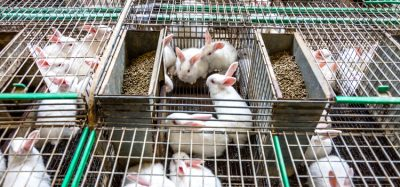EFSA identifies welfare issues with EU farmed rabbits