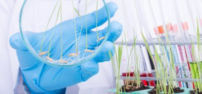 Scientists optimise prime editing for rice and wheat