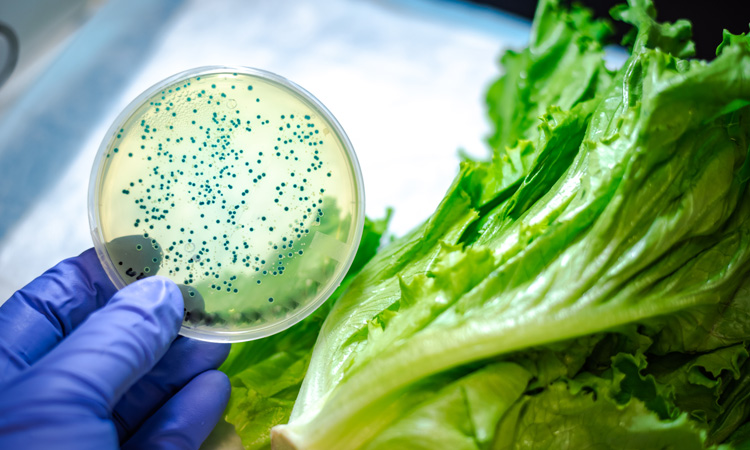 FDA provides update to romaine lettuce E. coli O157:H7 outbreak