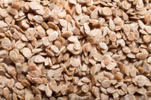 seedworks-india