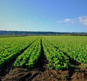 sicily-crops-agriculture