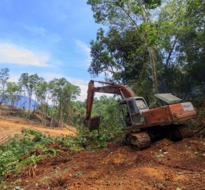 tropics-deforestation