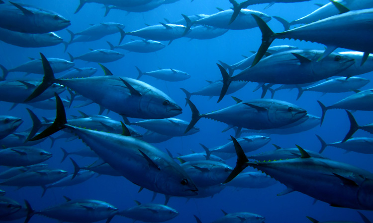 Ecuador adopts National Tuna Action Plan