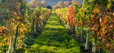 Climate change could create opportunities for UK viticulture