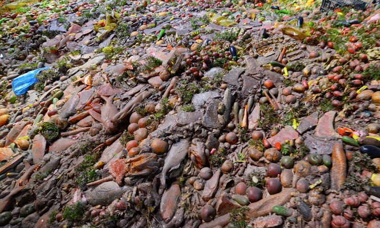 Global agenda issued to halve food loss and waste by 2030