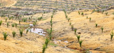 Palm oil land preparation causes most climate damage, research suggests